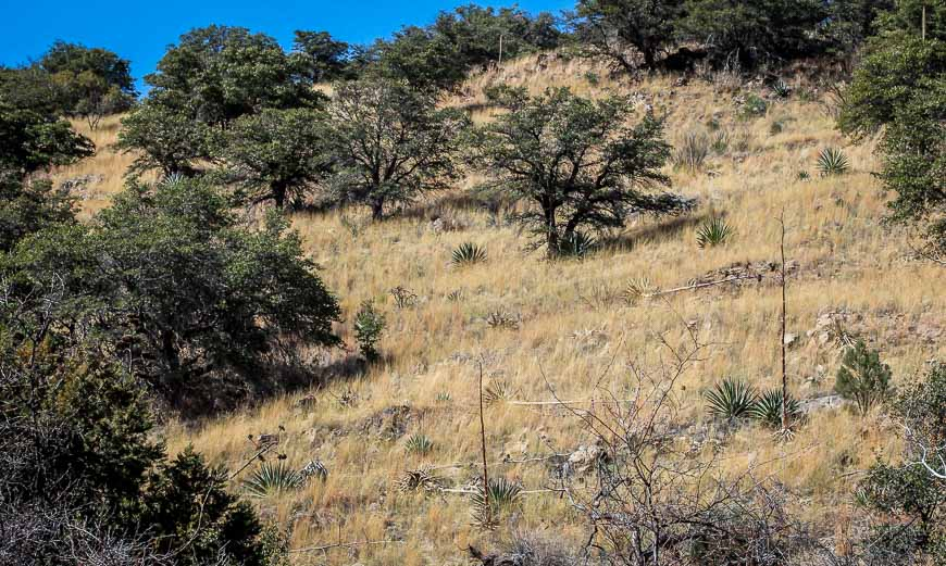 Dry, rough terrain outside of the Ramsey Canyon Reserve
