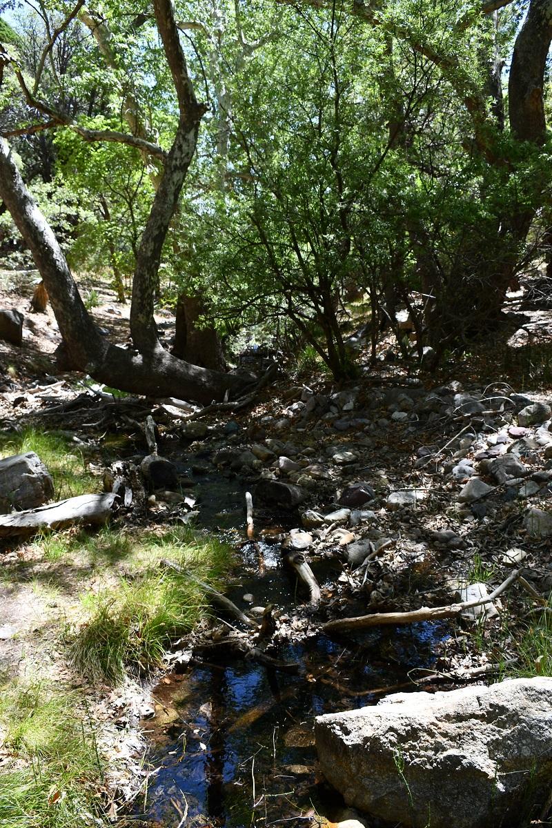 Wetlands, Ramsey Canyon Preserve